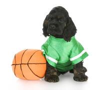 Dog in basketball uniform